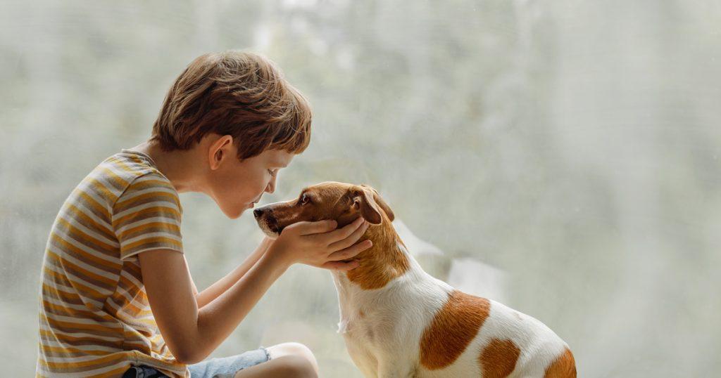 Çocuğunuzun evde evcil hayvan beslemesine izin vermek