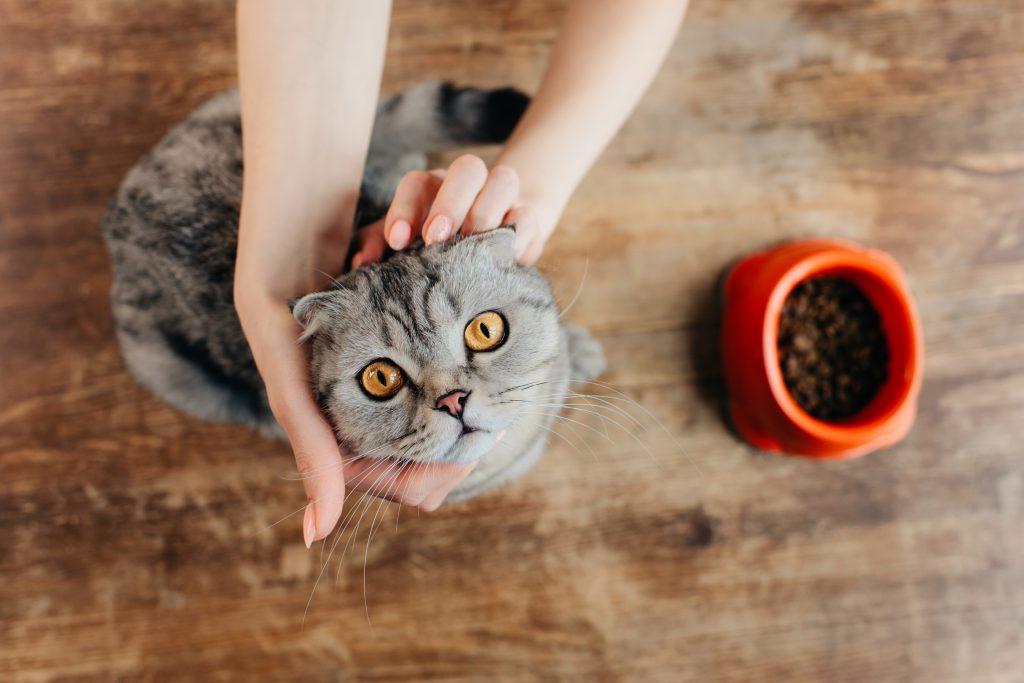Kedim Neden Mama Yemek İstemiyor?